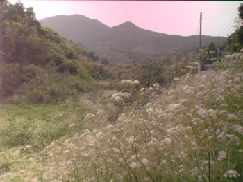 新緑の季節♪~自然満喫~_d0082356_1252054.jpg