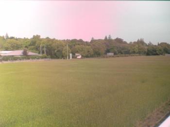 新緑の季節♪~自然満喫~_d0082356_125241.jpg