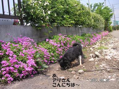 ポカポカお散歩_d0006467_23101429.jpg