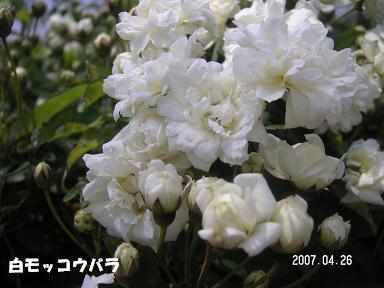 ポカポカお散歩_d0006467_23103574.jpg