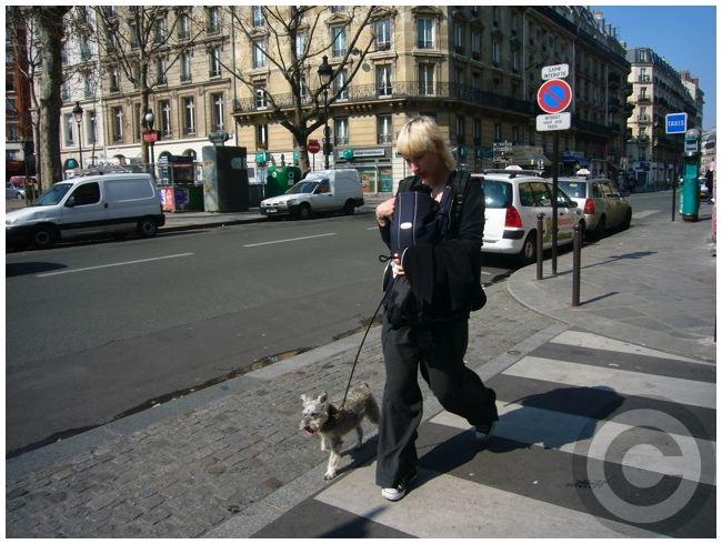 ■街角のワンコ(PARIS)_a0008105_922451.jpg