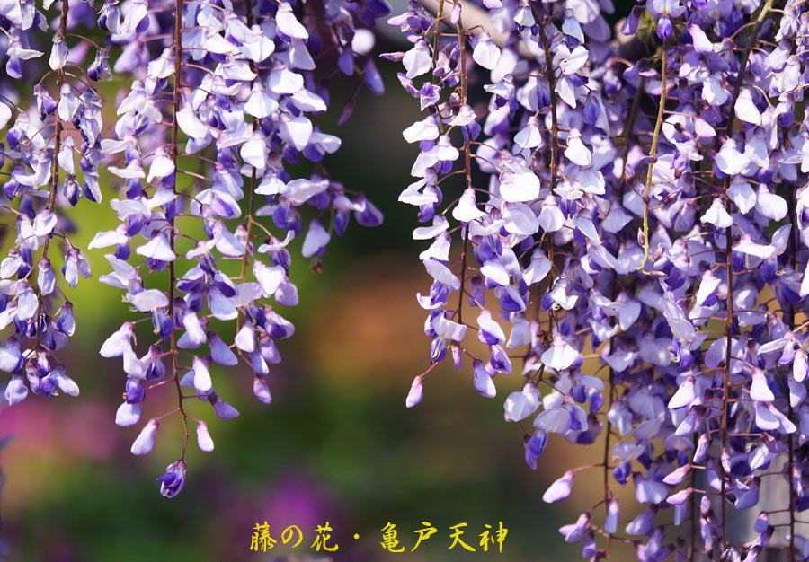 f0035323_1375797.jpg