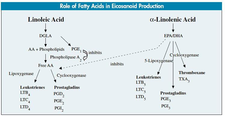 n-6:n-3PUFA比食はうつと炎症性プロセスを促進する_a0007242_14504253.jpg