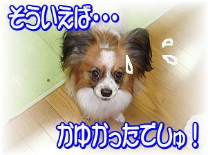 f0011845_2146923.jpg
