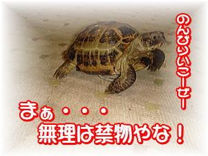 f0011845_810525.jpg