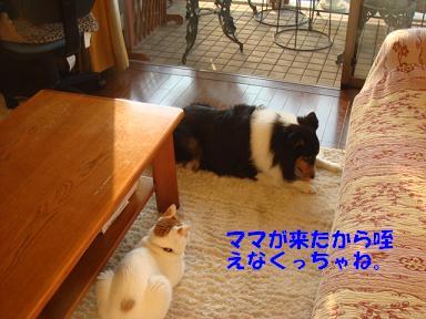 f0046854_20103464.jpg