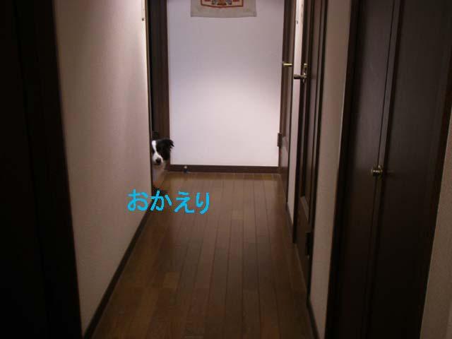 f0114893_9511788.jpg