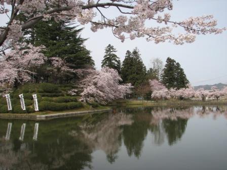 桜が満開の松が岬公園の朝_c0075701_16442762.jpg