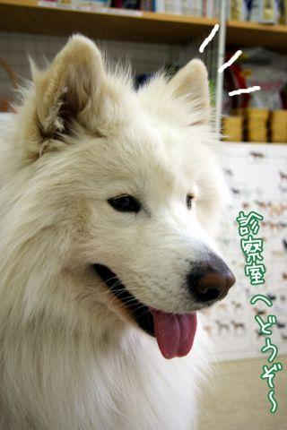第2回犬体実験_c0062832_1838399.jpg