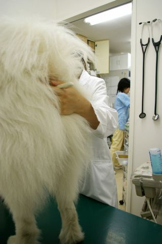 第2回犬体実験_c0062832_1839054.jpg