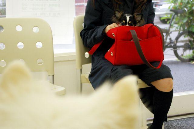 第2回犬体実験_c0062832_18392940.jpg