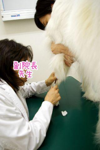 第2回犬体実験_c0062832_1839935.jpg