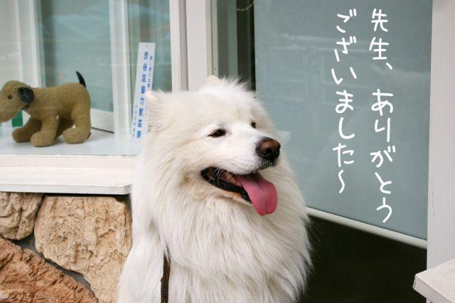 第2回犬体実験_c0062832_1840562.jpg