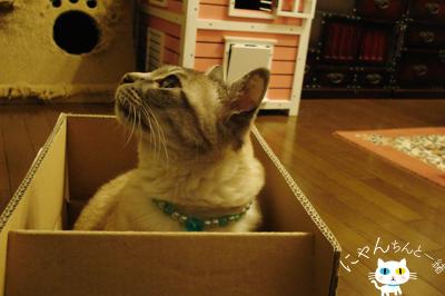 だって、そこに箱があるから…_e0031853_16174915.jpg