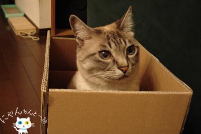だって、そこに箱があるから…_e0031853_16183380.jpg