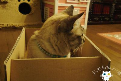 だって、そこに箱があるから…_e0031853_1618831.jpg