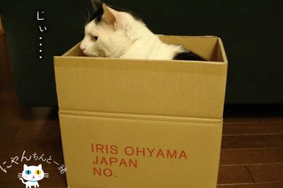 だって、そこに箱があるから…_e0031853_1619371.jpg
