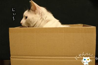 だって、そこに箱があるから…_e0031853_16195958.jpg