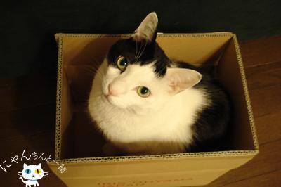 だって、そこに箱があるから…_e0031853_16205124.jpg
