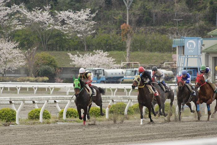 2007年4月8日(日) 高知競馬 3R_a0077663_2095316.jpg