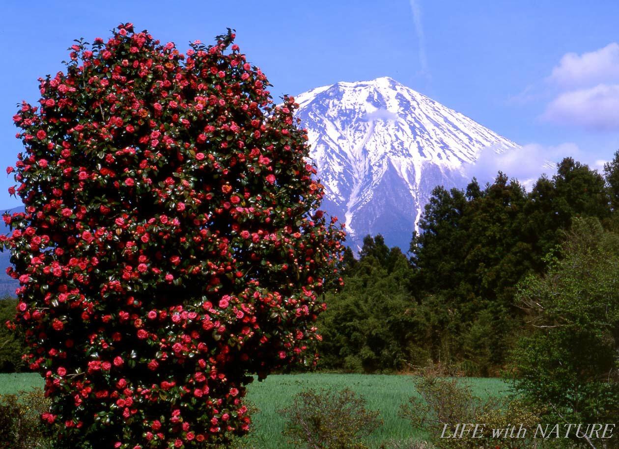 富士山を背にして_b0093088_10392157.jpg