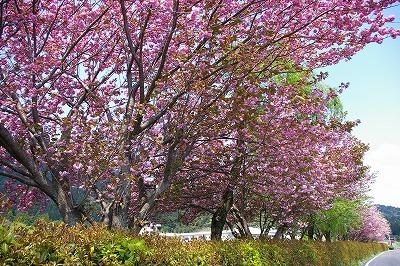 伊吹山(滋賀県)登山_f0138096_1982386.jpg