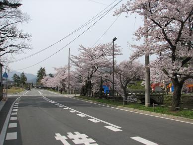 桜満開の松が岬公園の朝_c0075701_11496.jpg
