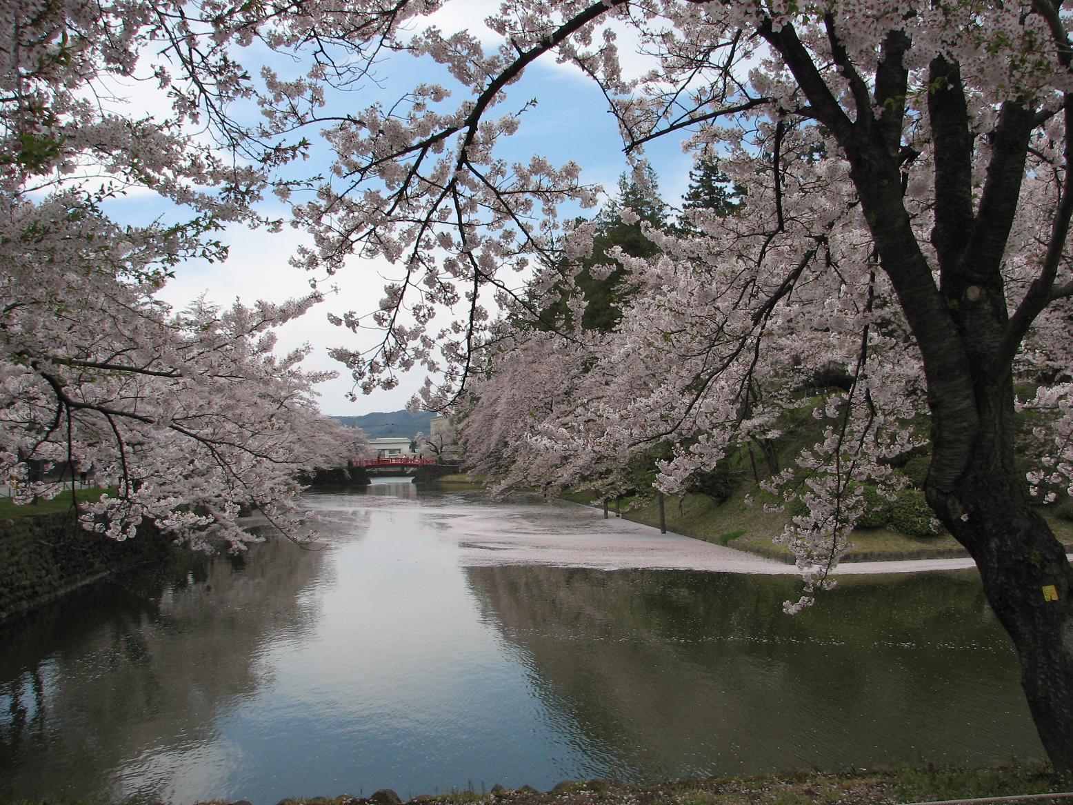 散る桜、残る桜も、散る桜_c0075701_1881374.jpg
