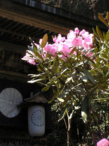岩屋山 志明院_e0048413_21493487.jpg