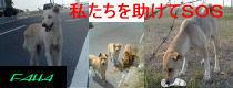f0114416_3284543.jpg