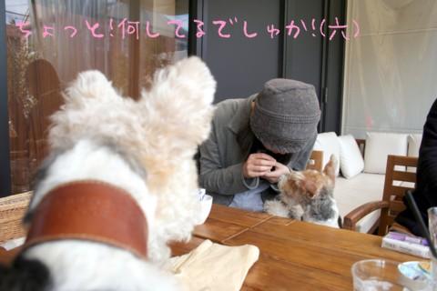 六花ちゃんと遊ぼう♪_c0070377_2253276.jpg