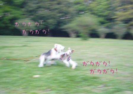 六花ちゃんと遊ぼう♪_c0070377_22591015.jpg