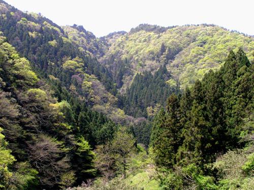 北山 天ヶ岳_e0048413_1857692.jpg