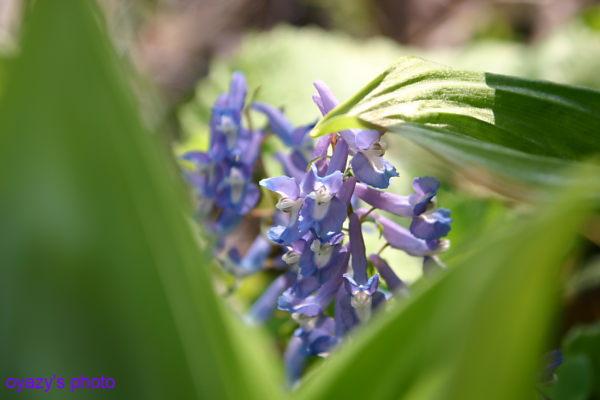北の春_a0071514_20584728.jpg