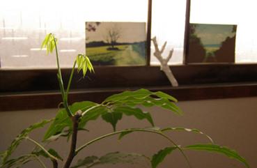 MON  30  APRIL  2007_a0099744_144678.jpg