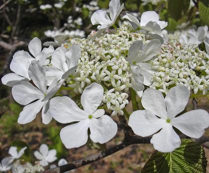 4月30日 赤城自然園 あれもこれも・・・_a0001354_22595467.jpg