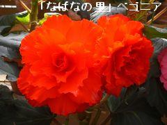 a0052666_19594136.jpg