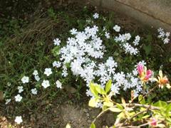 庭しごと_c0110869_15582549.jpg