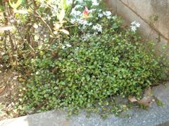 庭しごと_c0110869_15583864.jpg