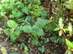 庭しごと_c0110869_15591589.jpg