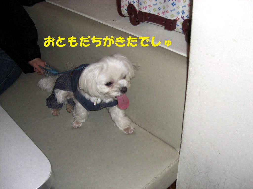 b0060071_29372.jpg
