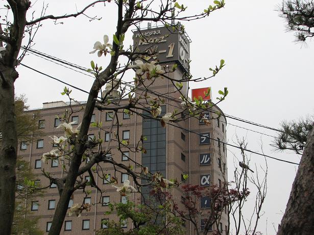 隣に咲く木蓮_c0075701_7144265.jpg
