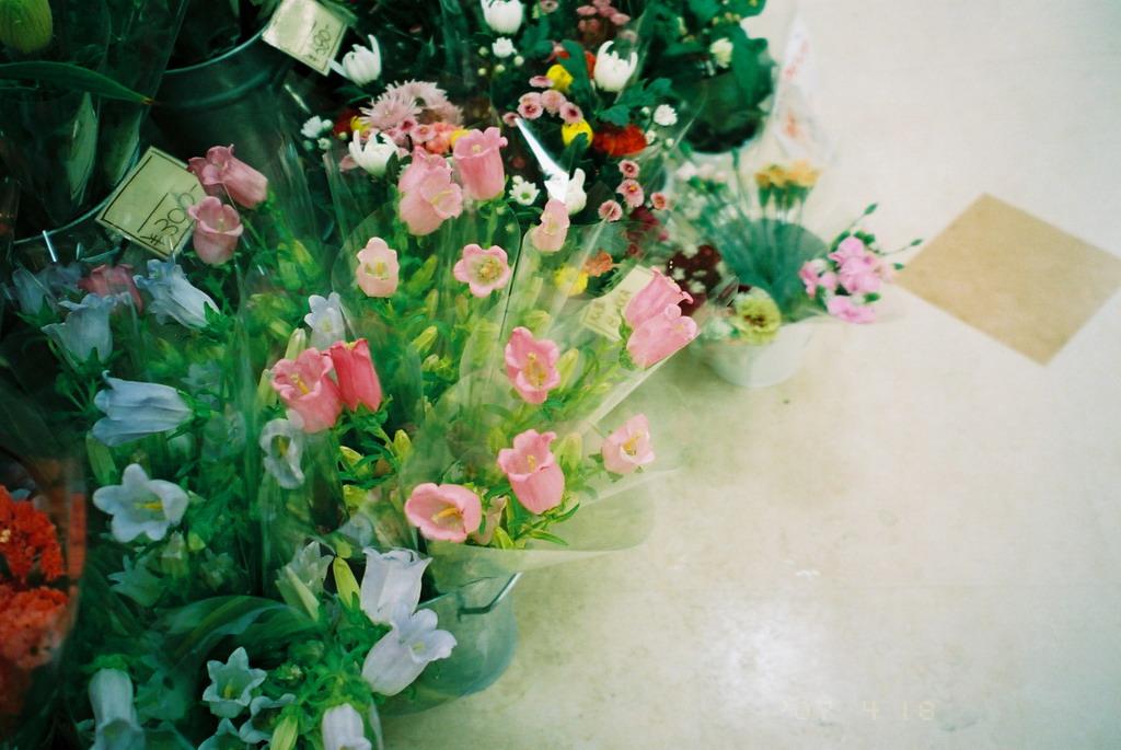 NATURA CLASSICA de Cossoli to Hanashashin_f0033205_21571986.jpg