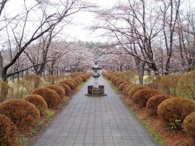 蓼科湖畔・聖光寺・桜情報_d0102327_15525786.jpg