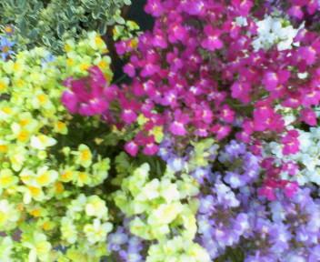 お花の季節 2_f0073848_7264687.jpg