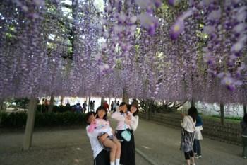 藤の花♪満開♪in唐津城_d0082356_8502184.jpg