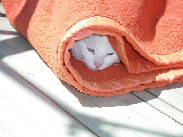 これ、あたしの毛布なのよ!_d0116059_2137011.jpg