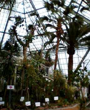 函館市熱帯植物園がリニューアルオープン!_b0106766_15242034.jpg