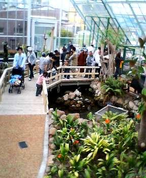 函館市熱帯植物園がリニューアルオープン!_b0106766_15243754.jpg