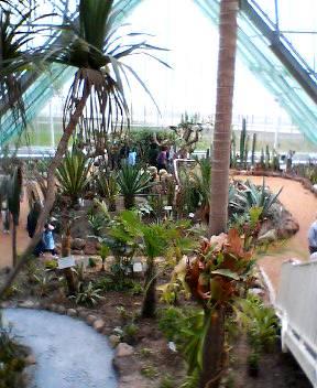 函館市熱帯植物園がリニューアルオープン!_b0106766_1525578.jpg